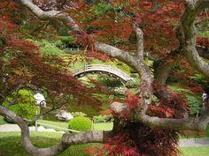 Image detail for -huntington botanical japanese garden picture