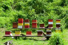 The Secret Lives of Honeybees: How Honey Gets Made | Serious Eats