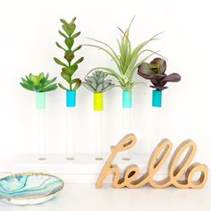 Bringing you another vase idea on the blog today. This painted test tube bud vase can easily be made in any size and color to fit your needs. Would you display succulents or fresh flowers in yours?  http://ift.tt/1Petd1J