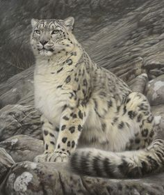 Sitting Snow Leopard by Gary Stinton, Pastel on museum board 38 x 32ins (96.5 x 81.3cm)