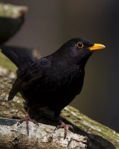 Blackbird ~ singing in the dead of night, take these broken wings and learn to fly...
