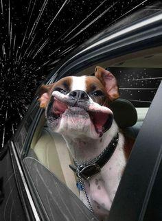 Warp dog~