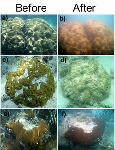 Coral before pollution and after