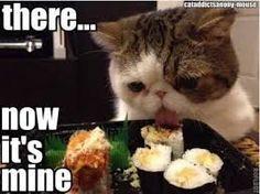 Bildergebnis für funny cats