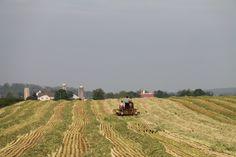 Raking Rye .. Lancaster County