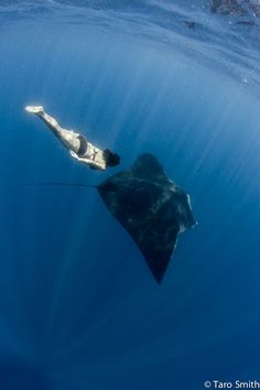 How yoga could save a 1,500-pound manta ray | GrindTV.com