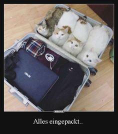 Alles eingepackt..
