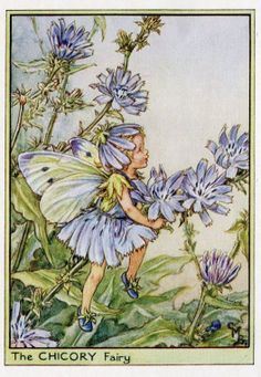 Chicory Flower Fairy Vintage Print, Cicely Mary Barker Book Plate Illustration by TheOldMapShop on Etsy Cicely Mary Barker, Vintage Prints, Vintage Art, Vintage Roses, Vintage Images, Flower Fairies Books, Vintage Fairies, Beautiful Fairies, Illustration Girl
