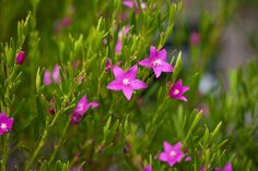 Australian Native Flowers: A Guide to Australian Flowers | Better Homes and Gardens