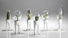 Domsai: Creative Cactus Planters With Legs | Home Design Lover