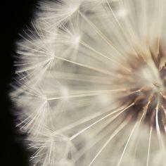 Make a wish......I make mine everyday......