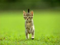image chat chat chatons chaton animaux humour insolite