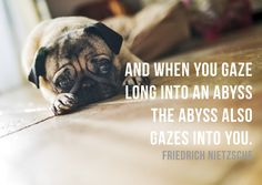 12 Adorably Sad Pugs Going Through An Existential Crisis
