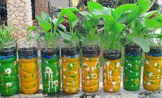 Cara Menanam Sayuran Hidroponik