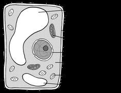 Plant Cell Black and White . 25 Plant Cell Black and White . A Brief Parison Of Plant Cell Vs Animal Cell Free Business Plan, Business Plan Template Free, Business Planning, Writing A Reference Letter, Animal Cell, Plant Cell, Science And Nature, Templates, How To Plan