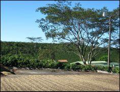 coffee drying, sundried coffee, Doka Estate, Alajuela, Costa Rica