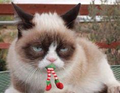 Funny Christmas Memes Elf Grumpy Cat Ideas For 2019 Grumpy Cat Quotes, Funny Grumpy Cat Memes, Cat Jokes, Animal Jokes, Funny Animal Memes, Funny Animal Pictures, Cute Funny Animals, Cute Cats, Funny Cats