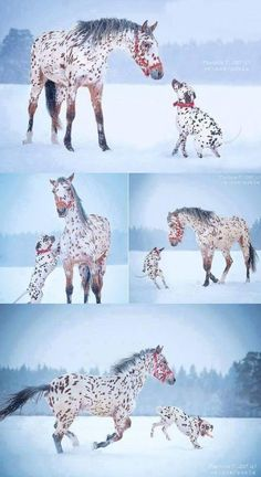 Pretty Horses, Horse Love, Beautiful Horses, Baby Dogs, Pet Dogs, Dogs And Puppies, Cute Baby Animals, Animals And Pets, Funny Animals