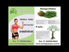 MORINGA DA PAZ,MORINGA OLEIFERA, - o alimento ideal para obesos e desnut...