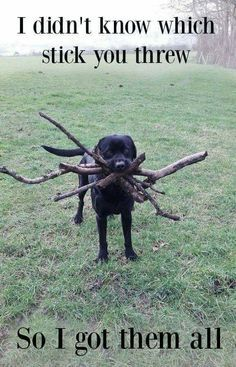 If my dog does not know which stick I threw he won't bring any back at all.
