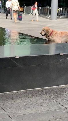 Saw this good boy having the time of his life chasing fish during my lunch break - Pets - tierbabys Funny Animal Memes, Dog Memes, Cute Funny Animals, Cute Baby Animals, Funny Dogs, Animals And Pets, Beautiful Dogs, Animals Beautiful, Cute Puppies