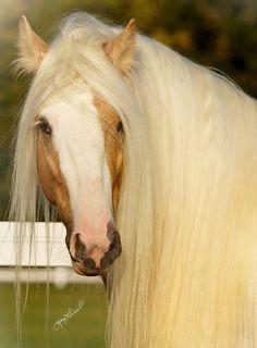 Stallion....breathtaking! Beautiful