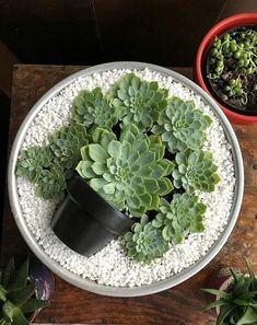Deco Trend: Small Colorful DIY Succulent Plant Pot in Top .- Deko-Trend: Kleiner bunter DIY-Sukkulenten-Blumentopf im Topf Deco Trend: Small Colorful DIY Succulent Plant Pot in Pot Succulents In Containers, Cacti And Succulents, Planting Succulents, Planting Flowers, Cactus Plants, Propagate Succulents, Diy Garden, Garden Care, Garden Pots