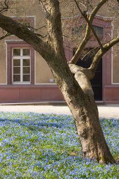 Ideal Botanischer Garten Karlsruhe