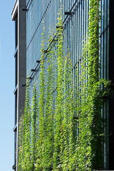 Tensile green facades by Tensile Design & Construct – Selector