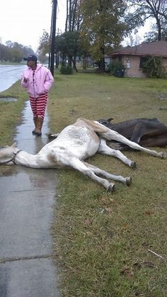 PLEASE READ THIS HEARTBREAKING STORY, IT WILL BLOW U AWAY ABOUT WHATS GOING ON IN HOUSTON, TEXAS!!!  Hundreds Of Horses Dumped Like Trash In Major U.S. City