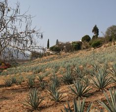 It's National Tequila Day! Impress Your Friends with Your Tequila Knowledge