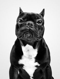 Dog Portraits by Marko Savic | Professional Photography Blog in B / N