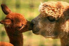 Sweet kisses from Le paradis des images