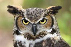 bird head - Google Search