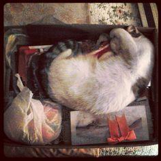 #cat #gata en #caja #dormir #sleeping Painting, Art, Boxes, Life, Art Background, Painting Art, Kunst, Paintings, Gcse Art