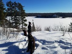 Jesse Olson - Megan, and dogs Loot and Magnus - Pausing to enjoy the view - Stub Lake trail located at Fall Lake Campground in Ely, MN #mukluk #stegermukluks