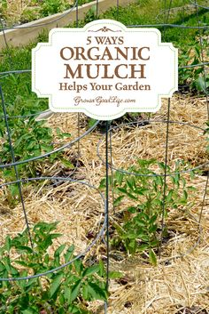 Mulch is any type of material that layered on the surface of the soil. Mulching your garden beds not only helps suppress weeds, it also prevents soil erosion and moderates soil-temperature fluctuations. Water, air and nutrients can filter through and reac Garden Soil, Edible Garden, Garden Beds, Organic Mulch, Organic Gardening Tips, Vegetable Gardening, Compost Mulch, Growing Veggies, Organic Vegetables