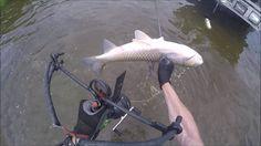 Illinois River Bowfishing Grass Carp