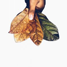 I remember when we used to pay stuff, bills and goods using leaves as money. One of my childhood memories that I will never forget. I Remember When, My Childhood Memories, Back In Time, Pinoy, Never Forget, When Us, Instagram Feed, Philippines, Leaves