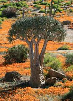 Spring Flower Route, Cape Town, West Coast, Namaqualand, South Africa Places To Travel, Places To See, Photo Tree, Wild Nature, Beautiful Places To Visit, The Great Outdoors, West Coast, South Africa, Around The Worlds