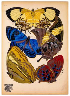 The artist, designer and etymologist E.A. Seguy was very prolific in the early part of the last century in France. This is part of a larger set of about 14 groups of butterflies.