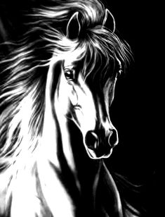 Pintura ,cavalo - Her Crochet Pencil Drawings Of Animals, Horse Drawings, Art Drawings Sketches, Arte Equina, Horse Stencil, Black Canvas Art, Horse Canvas Painting, Black Paper Drawing, Horse Sketch