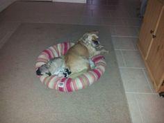 Daisy and Otis cuddling together :-)
