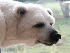 Solo | Bears Upon Soar
