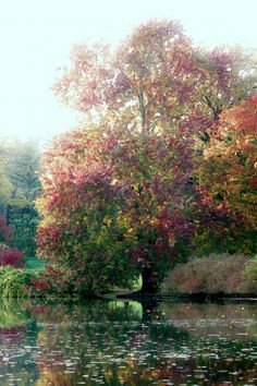 Monet's Tree. I honestly have trouble deciding if thats really a painting