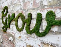moss words  In your blender, combine:  One can of cheap beer or 1 1/2 cups buttermilk  A few handfuls of moss  One teaspoon of sugar.  Blend until the mixture is smooth, and you're ready to get painting!  You can use a brush to paint your moss onto concrete walls, rocks, or brick. Mist the moss once a day to help it thrive, and soon your green graffiti will take hold!