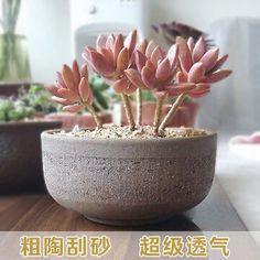 Coarse pottery pots succulents pots ceramic pots fleshy creative minimalist size pile of old stoneware pots breathable