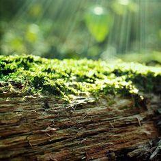 Simple moss glowing