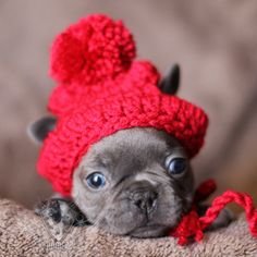b12e33948 16 Best Fancy Frenchy Beanies images in 2018 | French bulldog ...