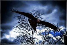 Où sont mes oiseaux ? Ah, les voilà ! Où sont les fauconniers ? Il ne reste plus que les cages à blason d'équipage .. #PuyduFou #PuyduFouPark #BalDesOiseauxFantomes #birds #rapace #photography #Equinoxe79